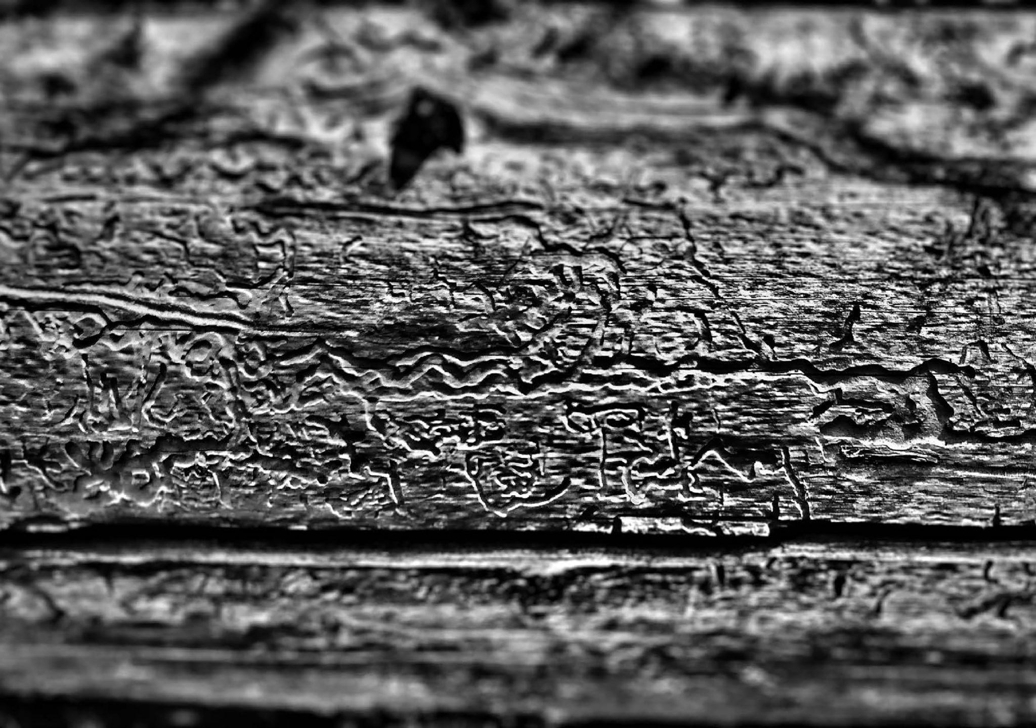 gallery woody debris